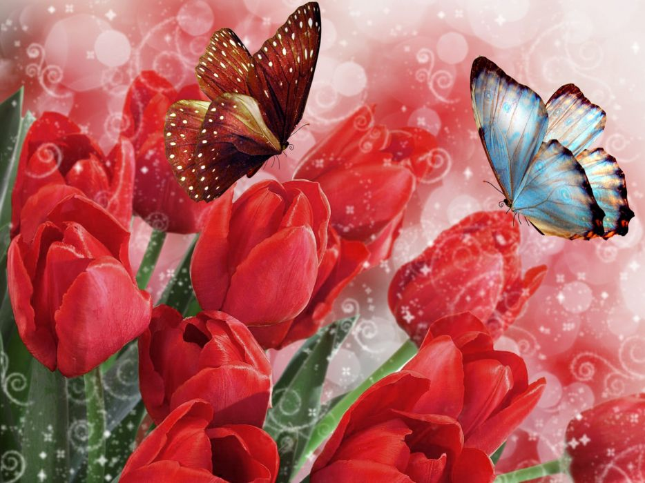 Tulips Butterflies Flowers bokeh butterfly wallpaper