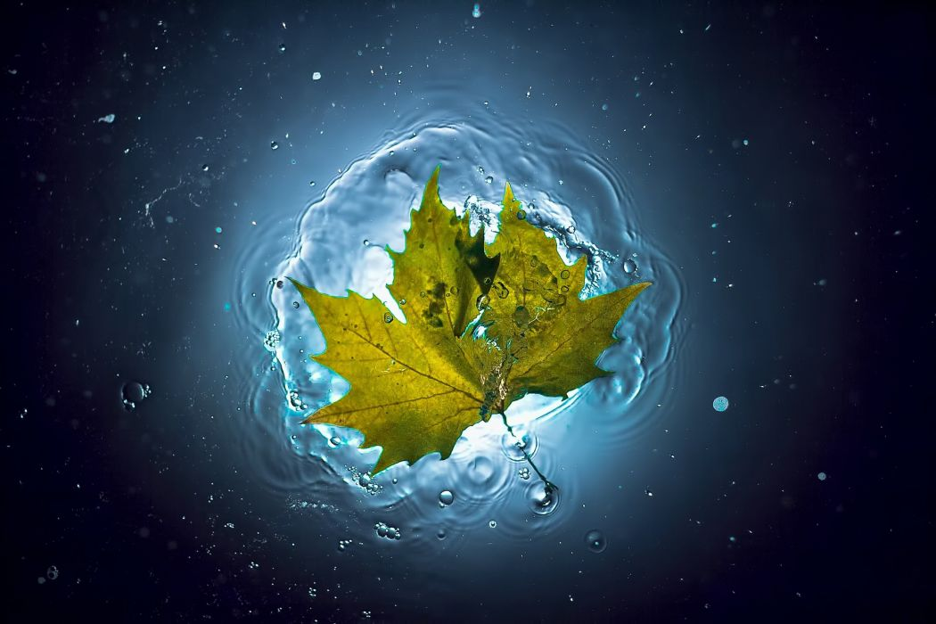 water leaf summer autumn bubbles glow wallpaper