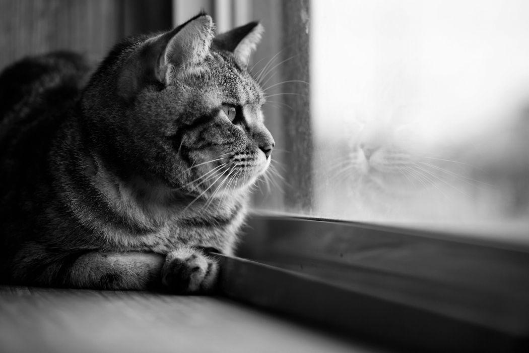 window glass eyes cat wallpaper