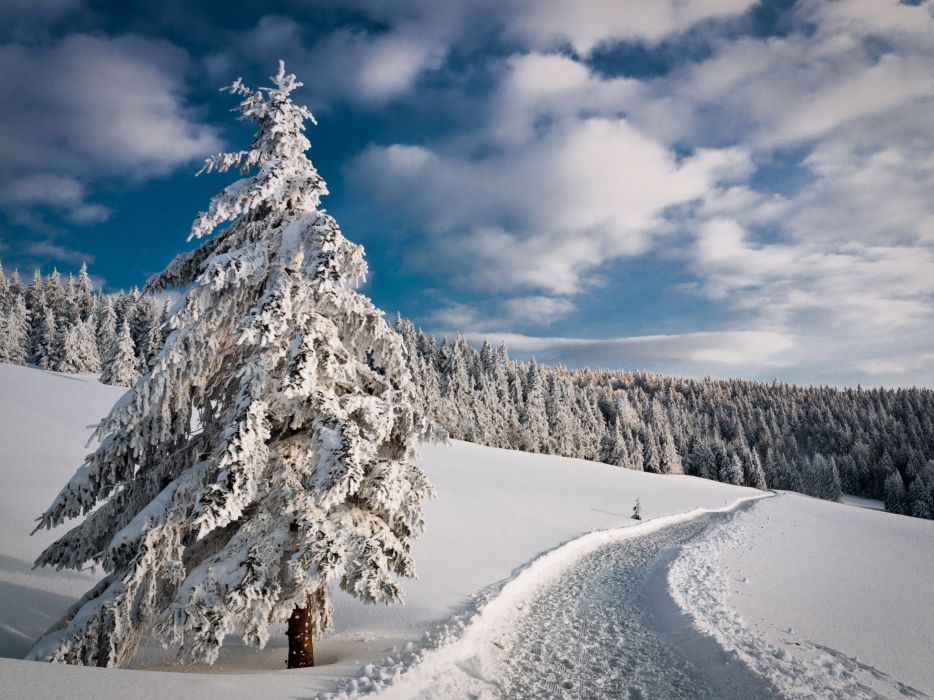 winter road forest trees landscape wallpaper
