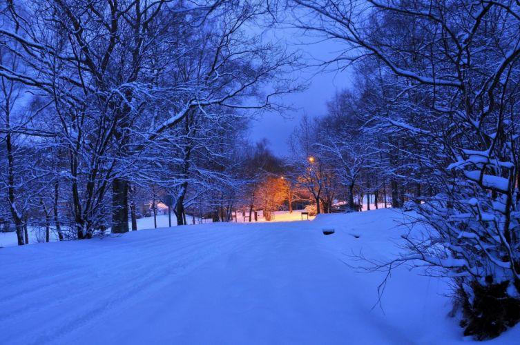 winter road trees lights landscape wallpaper