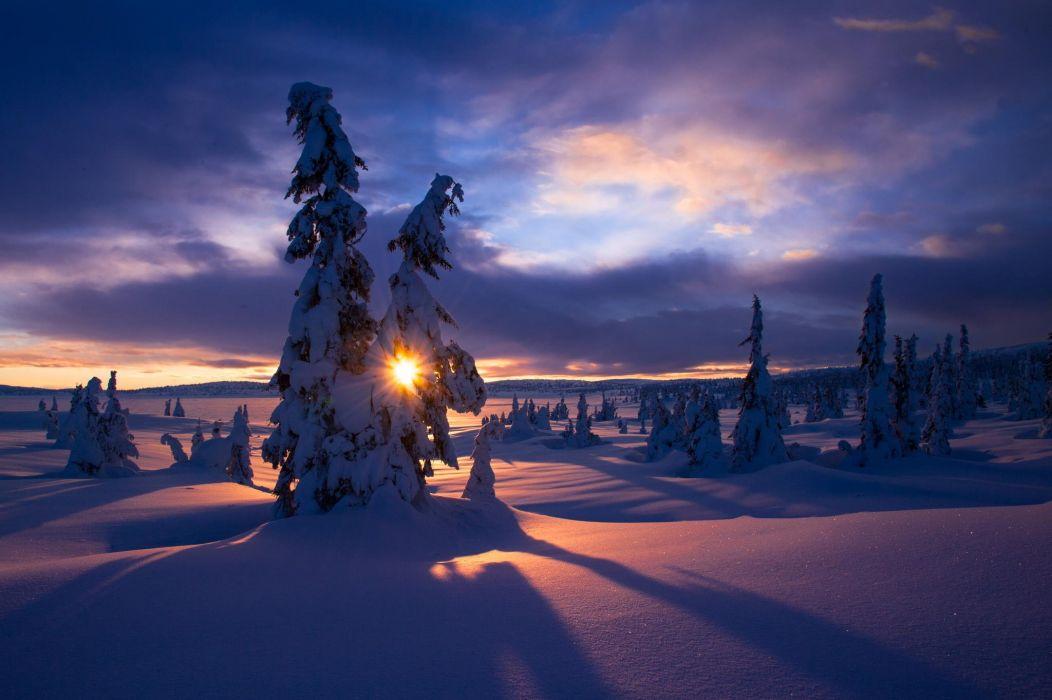 winter snow frost trees sun wallpaper
