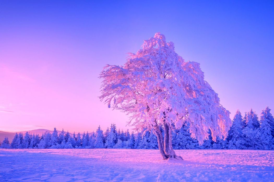winter tree landscape wallpaper