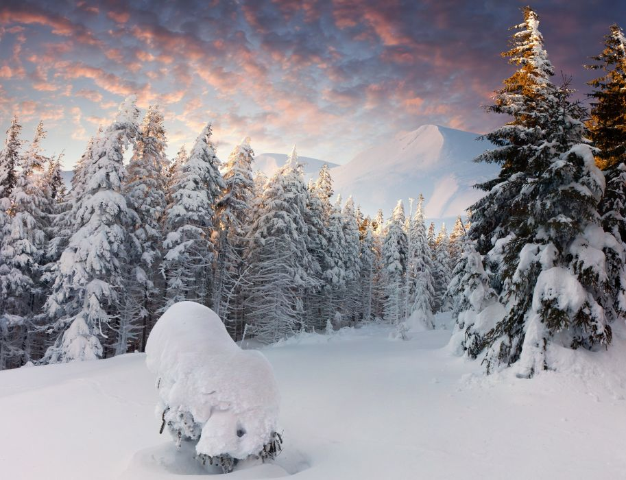 winter trees mountains forest snow snowdrifts wallpaper