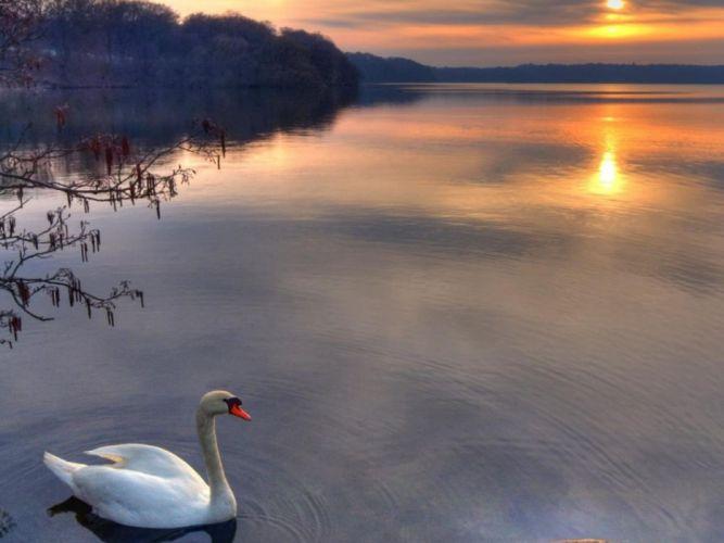 Sun birds swans lakes wallpaper