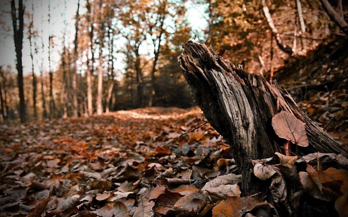 landscapes nature autumn leaves oak wallpaper