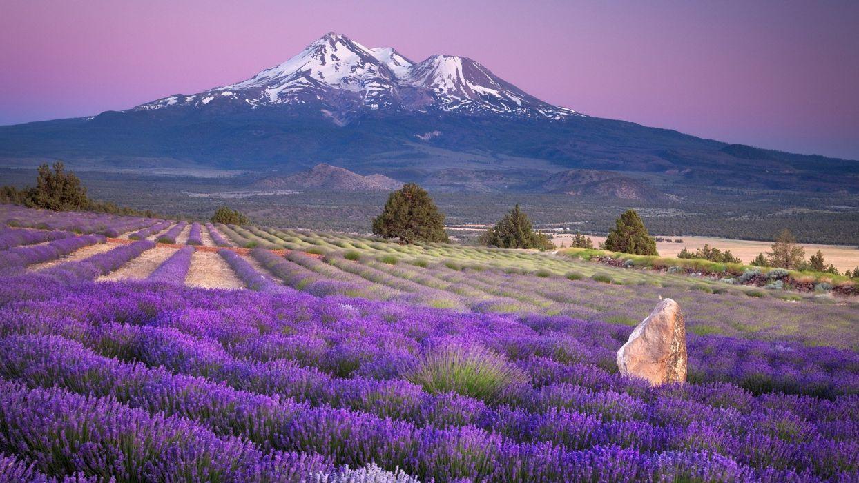 mountains fields California lavender Mount Shasta farms wallpaper