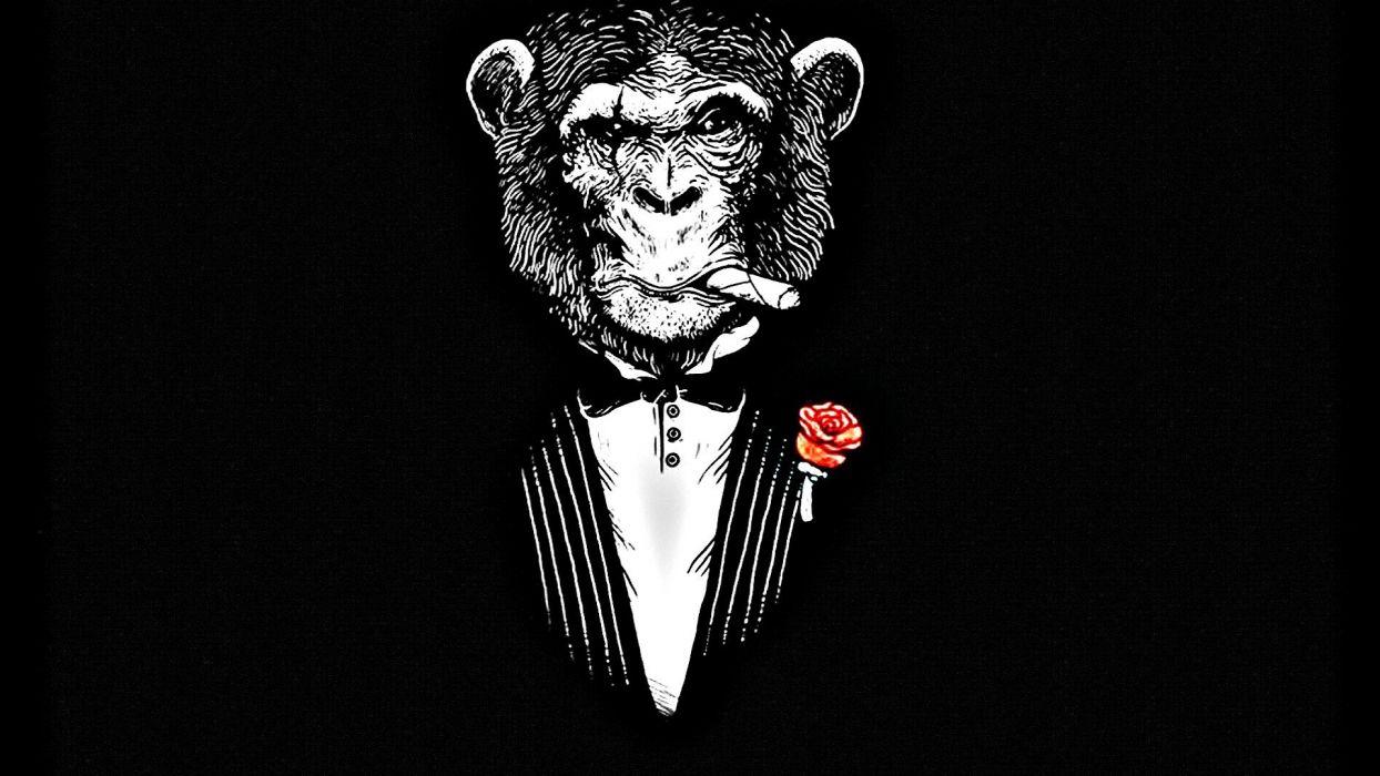 animals monkeys black background wallpaper