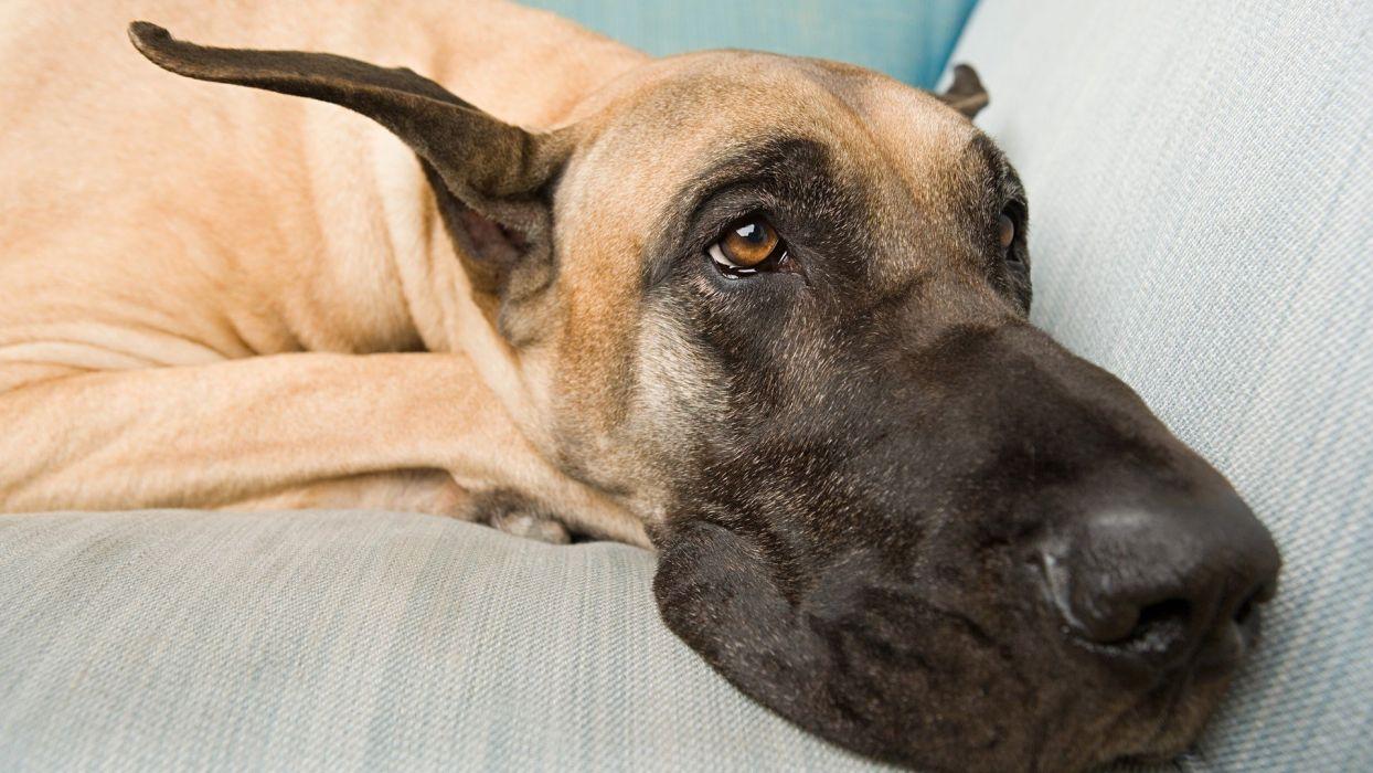 dogs sad wallpaper