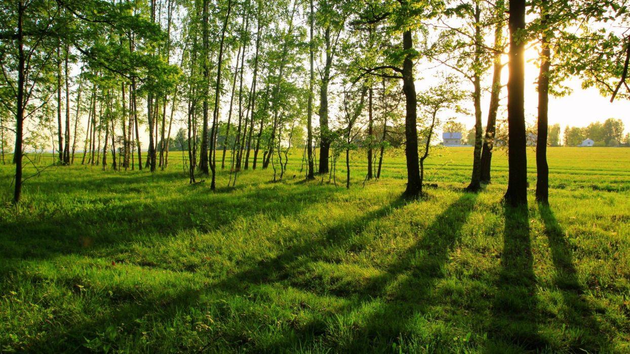 nature trees grass sunlight wallpaper
