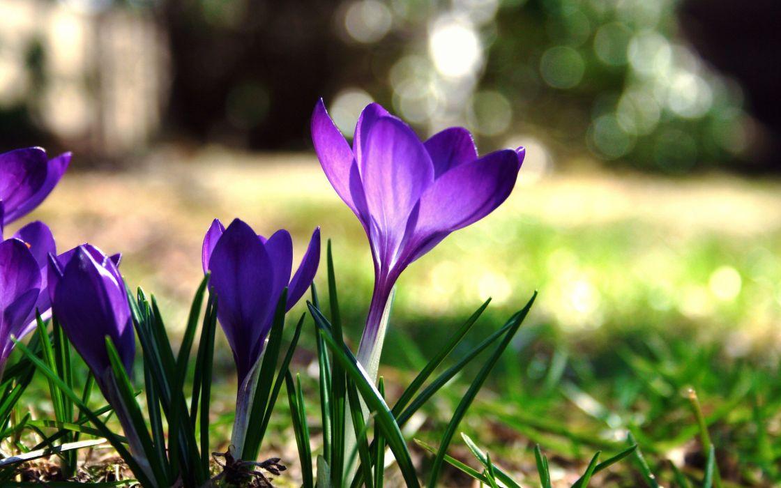flowers purple flowers wallpaper