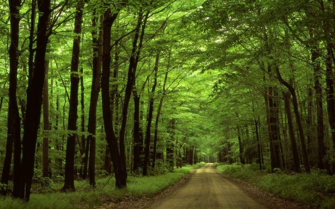 nature forests roads wallpaper