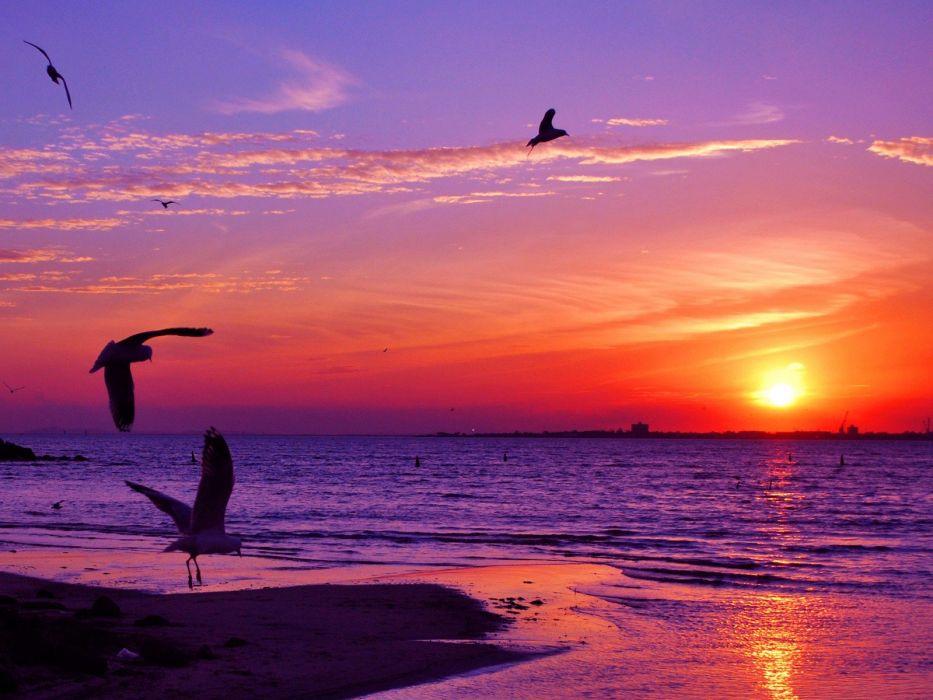 sunset animals seagulls sea wallpaper