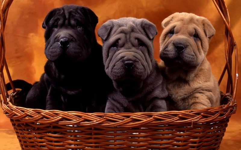dogs baskets wallpaper