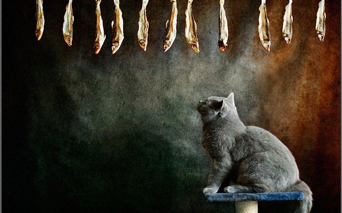 cats animals fish wallpaper