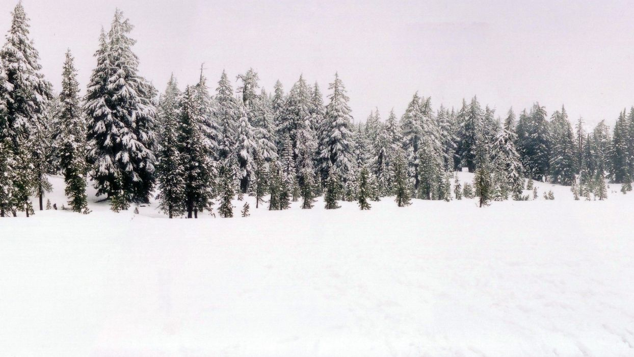 nature snow forests wallpaper