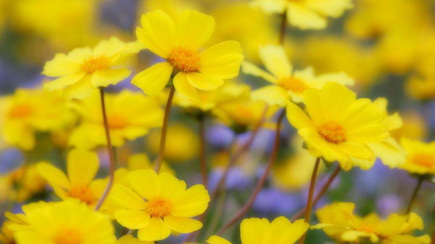 flowers deserts California national plain wallpaper