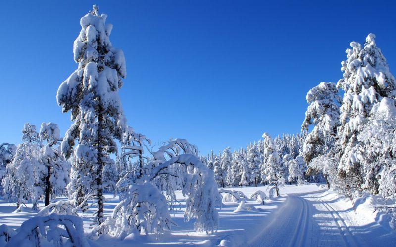 nature snow trees wallpaper