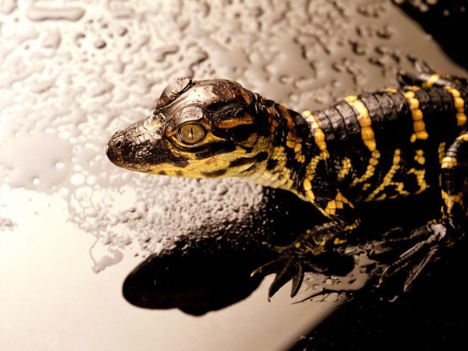 reptiles wallpaper