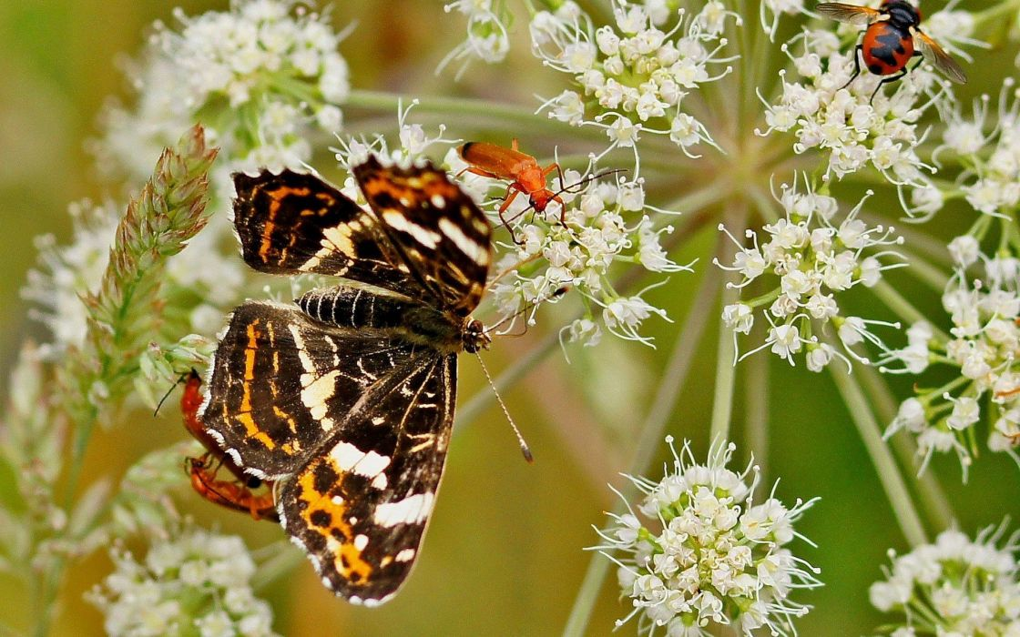 nature flowers animals insects butterflies wallpaper