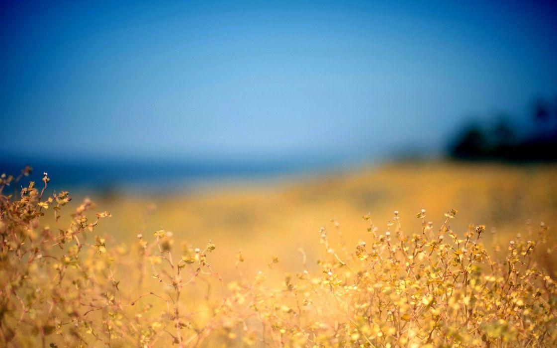blue landscapes nature autumn yellow grass sky wallpaper