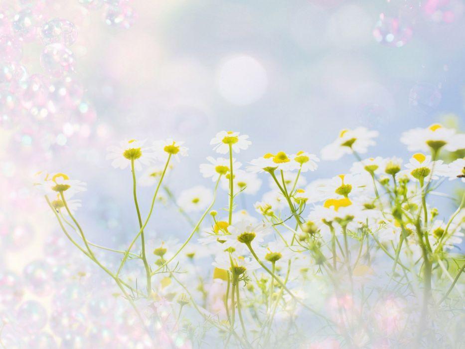 abstract nature flowers digital art wallpaper