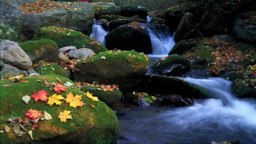 mountains autumn leaves Tennessee National Park wallpaper