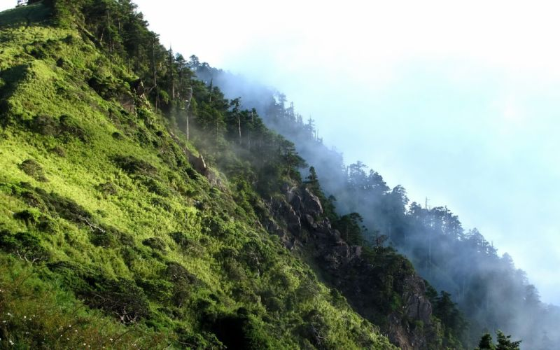 mountains landscapes nature trees grass hills rocks mist wallpaper