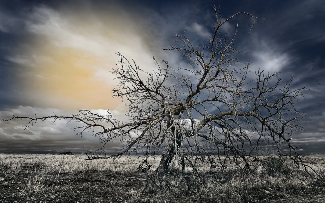 nature death trees HDR photography wallpaper