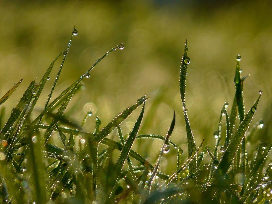 water grass water drops macro dew wallpaper