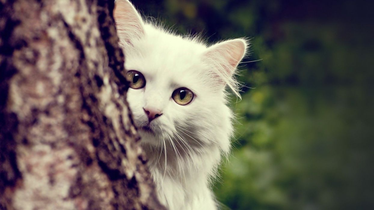 trees white cats animals wallpaper