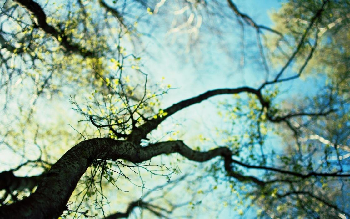 nature trees forests spring sunlight depth of field skyscapes worms eye view wallpaper