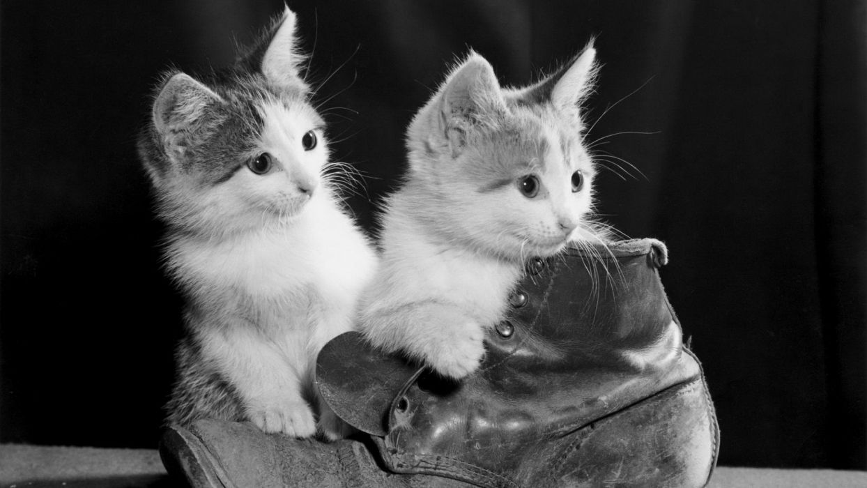 cats monochrome Puss in Boots wallpaper