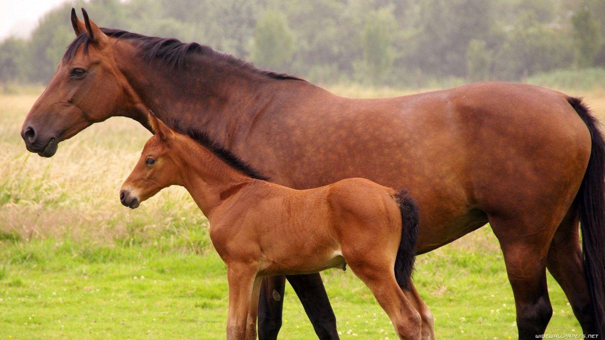 landscapes nature animals grass horses wallpaper