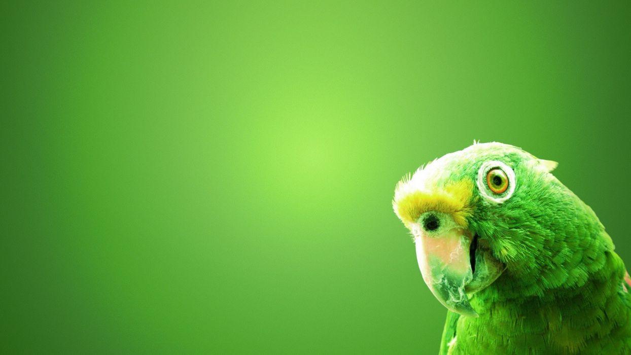 green birds parrots green background wallpaper