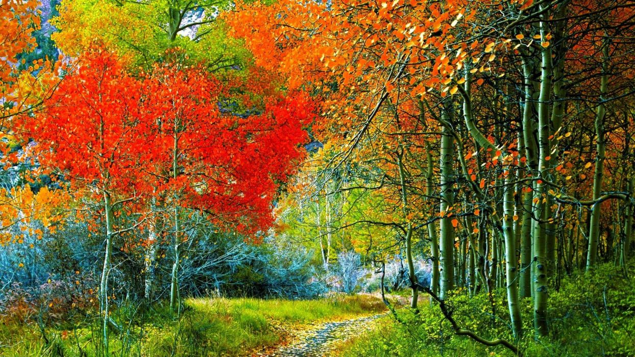 nature trees autumn wallpaper