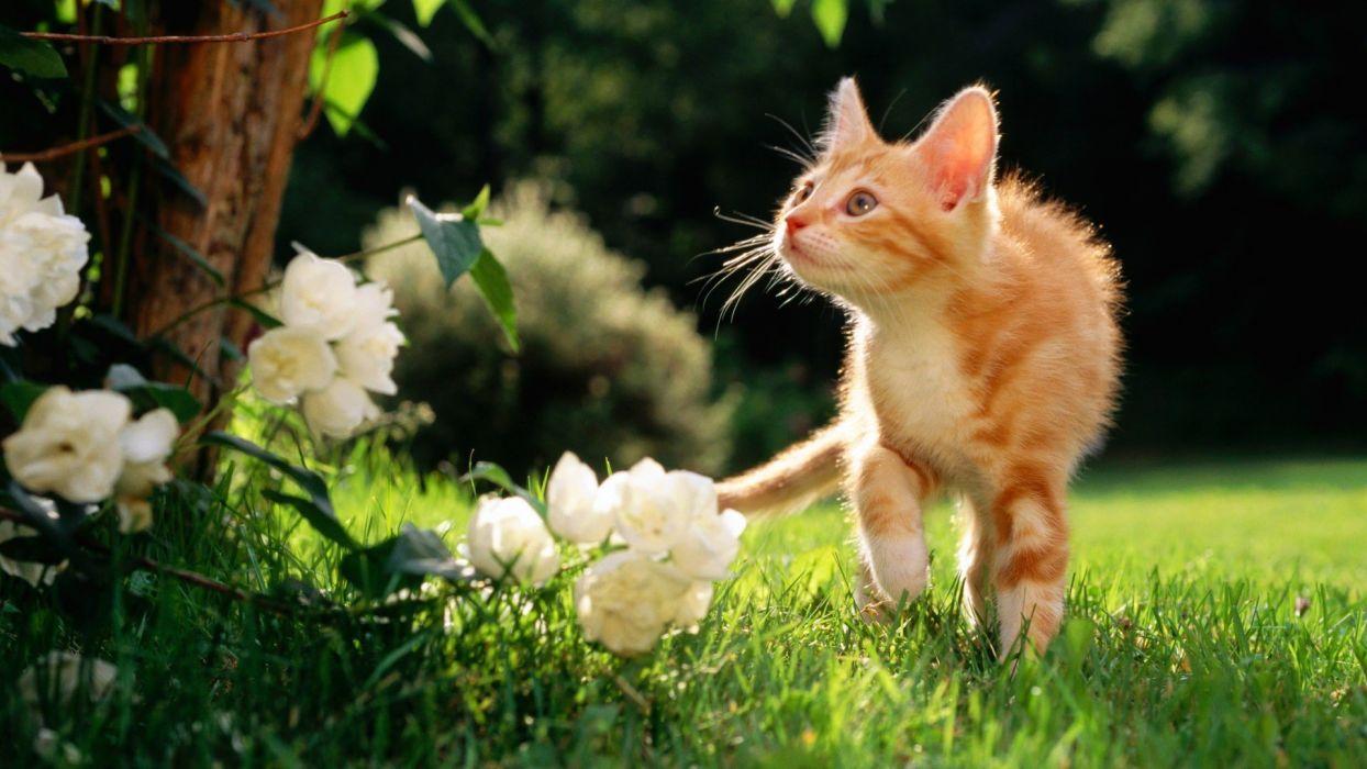 flowers cats animals orange grass outdoors kittens wallpaper