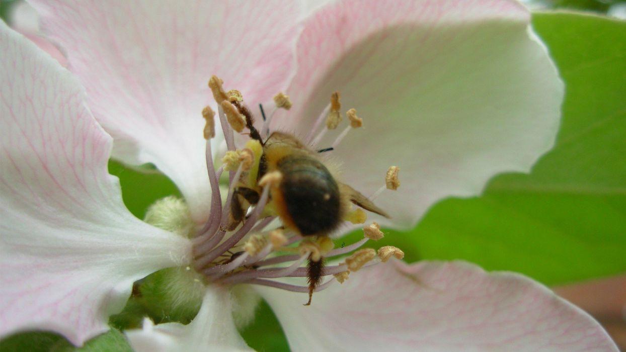 flowers bees purple flowers wallpaper