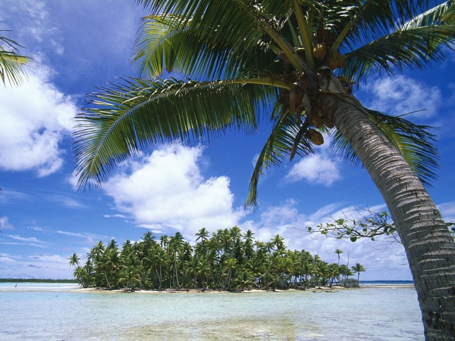 palm trees sea beaches wallpaper