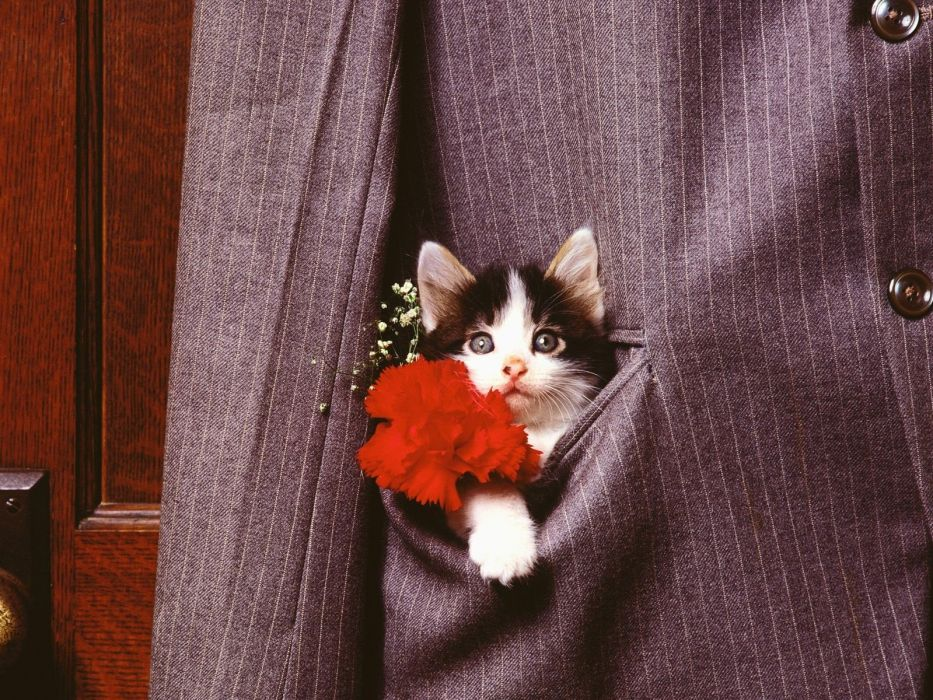 flowers cats animals suit kittens wallpaper