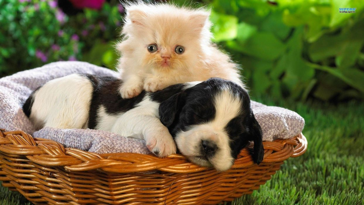 nature cats animals dogs puppies kittens wallpaper