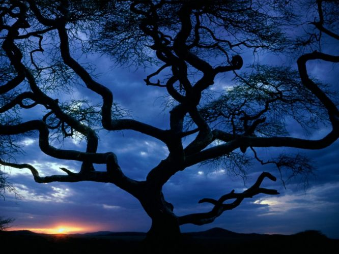 sunset clouds nature trees wallpaper