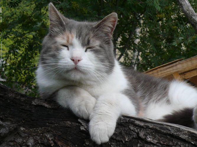 cats animals sleeping closed eyes pets wallpaper