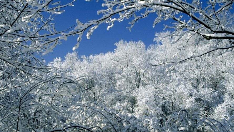 snow trees Tennessee parks wallpaper