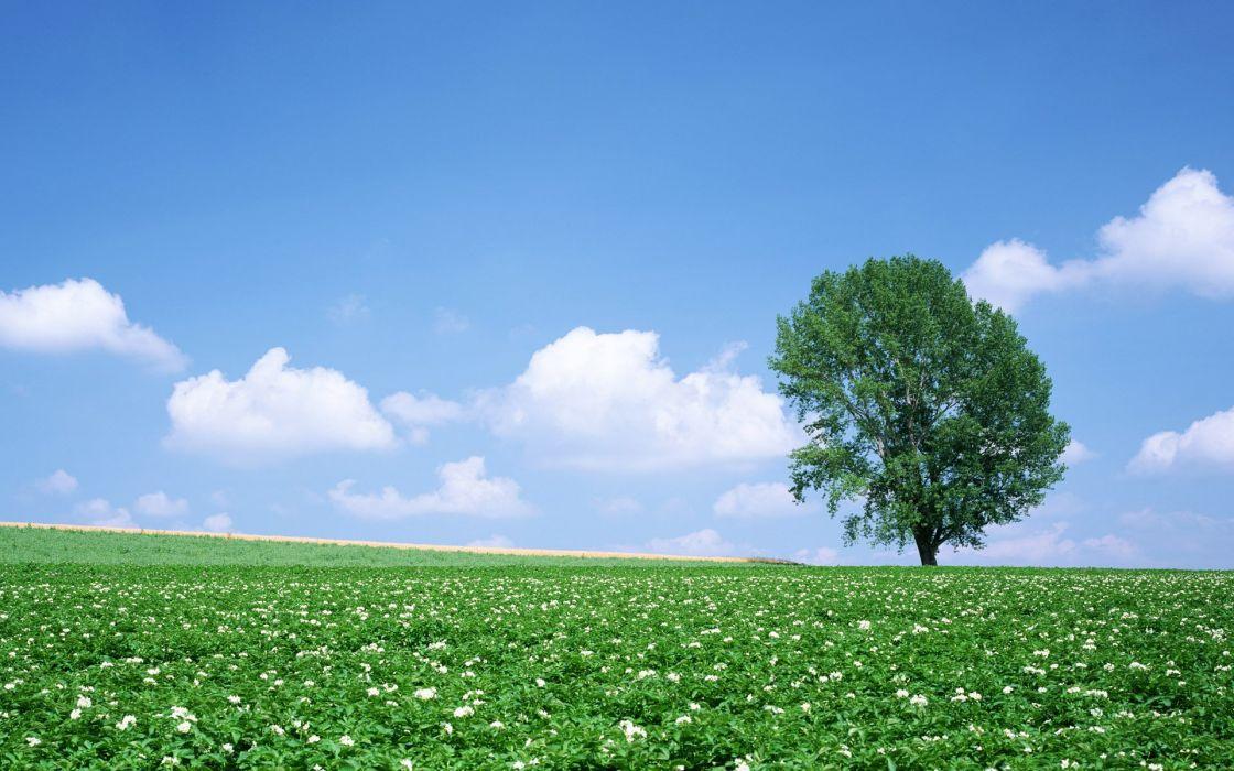 clouds landscapes trees wallpaper