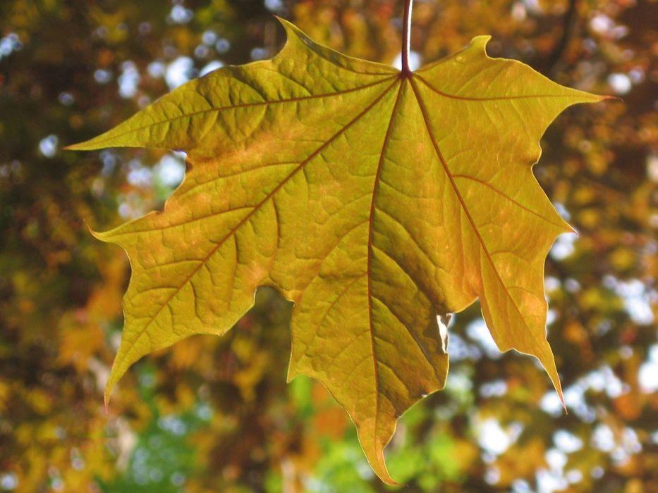 Картинки листьев желтых, смешные картинки