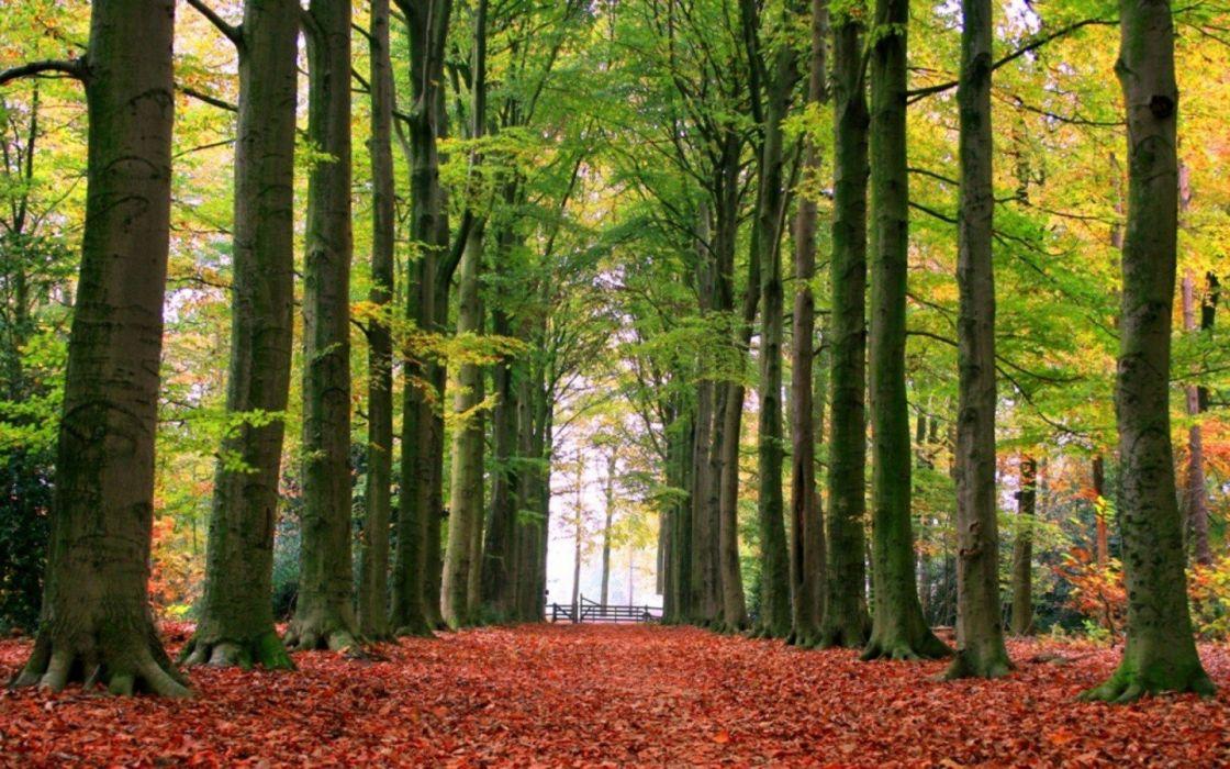 autumn roads wallpaper