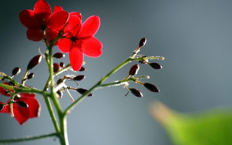 flowers plants wallpaper