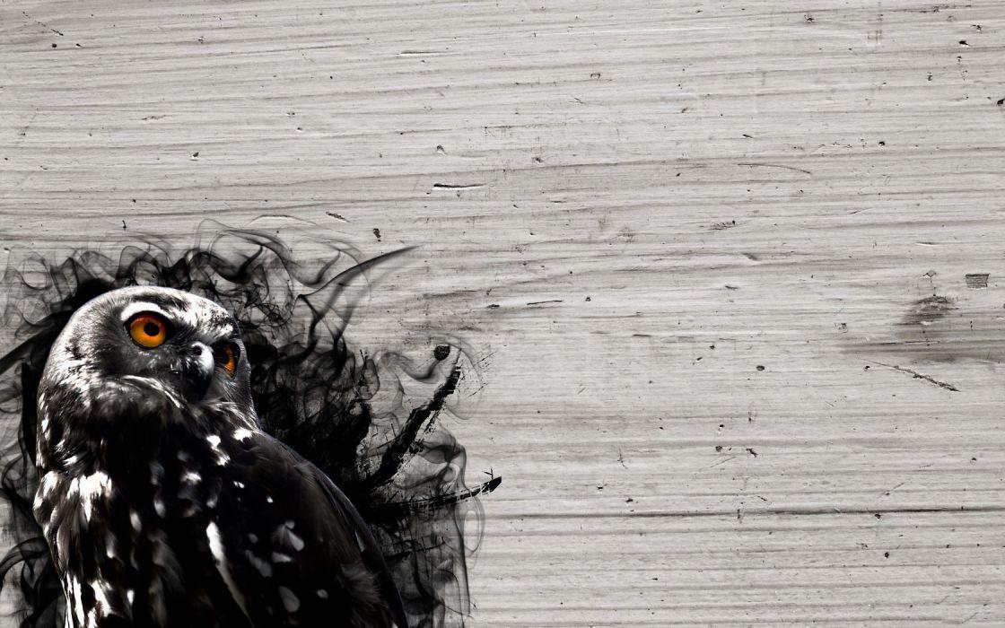 wood birds smoke owls wallpaper
