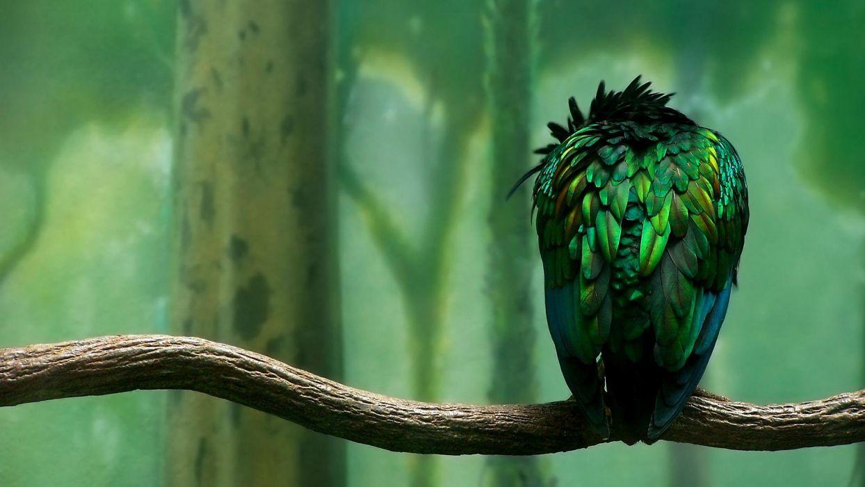 green birds duplicate wallpaper